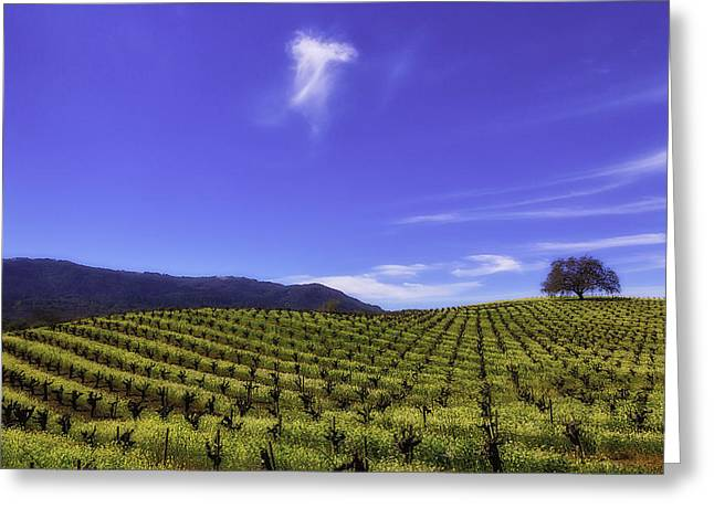 Cloud Above The Vineyards Greeting Card