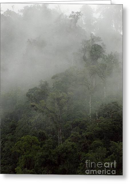 Cloud Forest Greeting Card by Kathy McClure