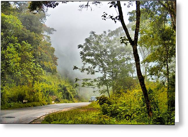 Cloud Forest Greeting Card