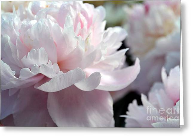 Cloud Of Peonies-47 Greeting Card