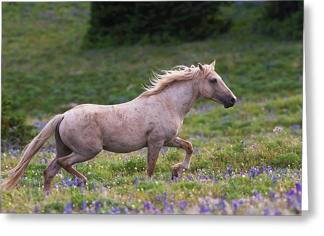 Cloud- Wild Stallion Of The West Greeting Card