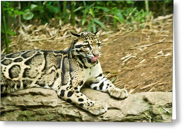 Clouded Leopard 1 Greeting Card