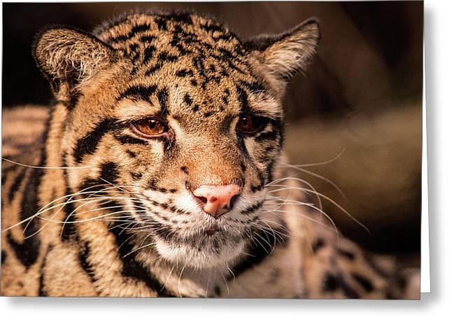 Clouded Leopard II Greeting Card