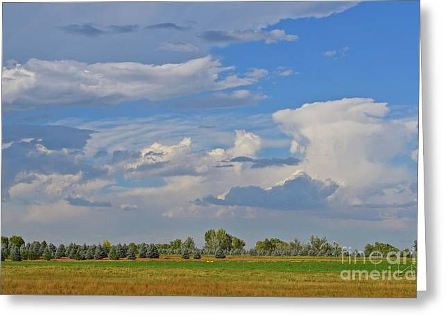 Clouds Aboive The Tree Farm Greeting Card