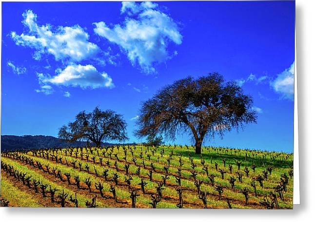 Clouds Above Vinyards Greeting Card by Garry Gay