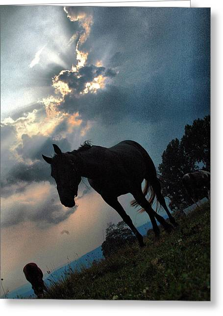 Clouds And Equine Greeting Card
