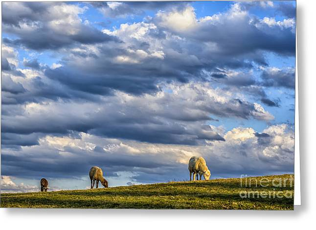 Clouds And Grazing Sheep Greeting Card by Thomas R Fletcher