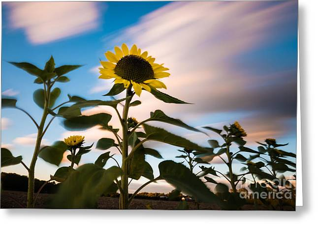 Clouds And Sunflower In Motion Greeting Card
