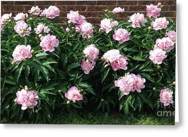Clouds Of Peony Greeting Card