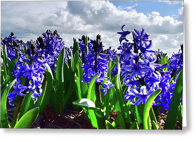 Clouds Over The Purple Hyacinth Field Greeting Card