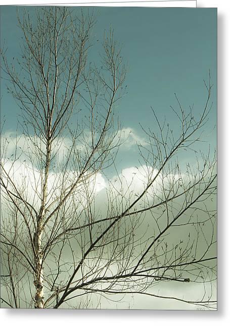 Cloudy Blue Sky Through Tree Top No 1 Greeting Card by Ben and Raisa Gertsberg