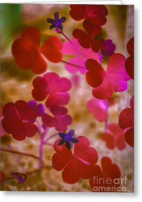 Clover - Abstract Greeting Card