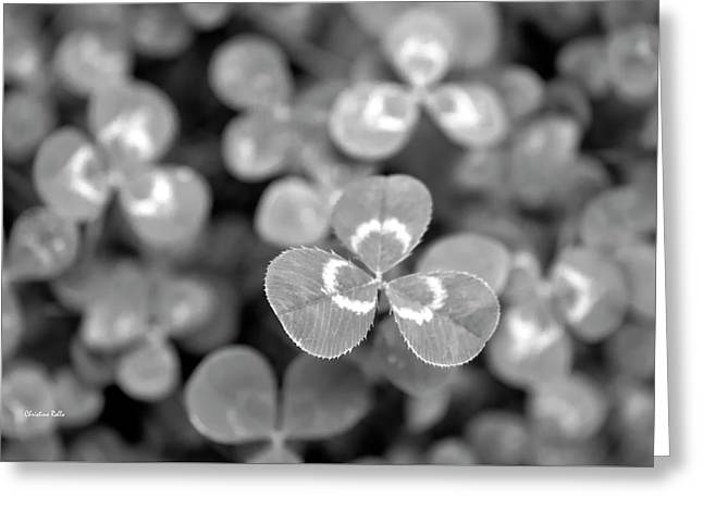 Clover Black And White Greeting Card by Christina Rollo