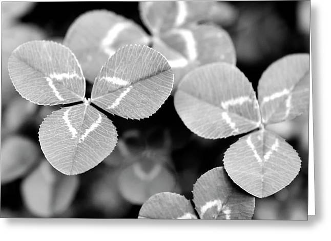 Clover Square Greeting Card by Christina Rollo