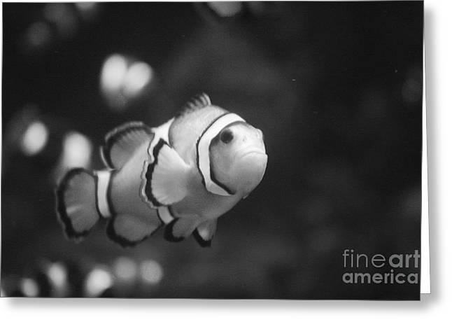 Clownfish Greeting Card by Brenton Woodruff