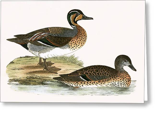 Clucking Teal Greeting Card by English School
