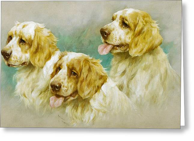 Clumber Spaniels Greeting Card by Arthur Wardle