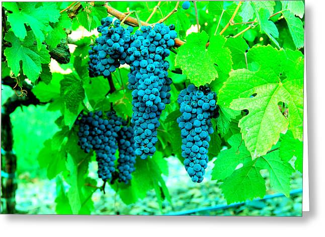 Cluster Of Wine Grapes Greeting Card by Jeff Swan