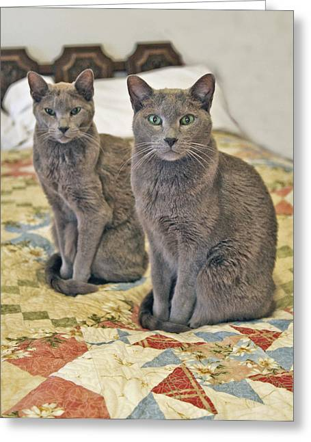 Cats Show Greeting Cards - Clyde and Bonnie Greeting Card by James Steele