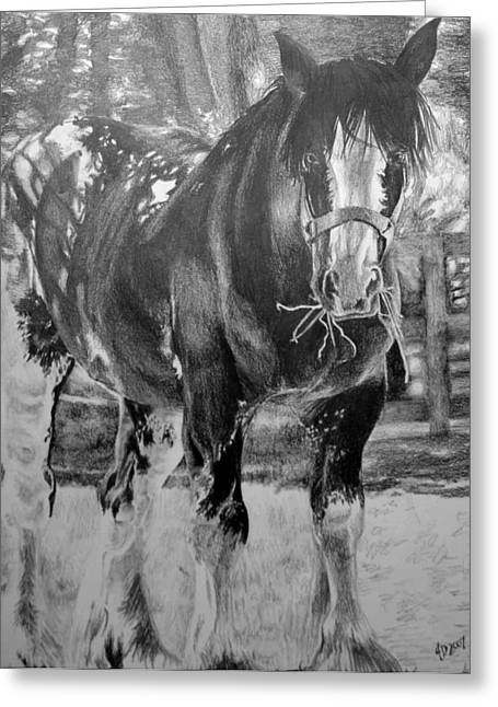Clydesdale Greeting Card by Darcie Duranceau