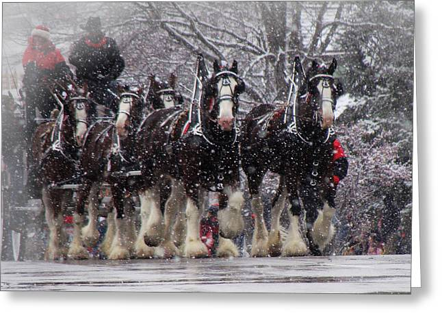 Clydesdale Hitch Greeting Card by Nancy Bairnsfather