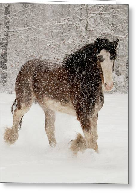 Clydesdale In The Snow Greeting Card