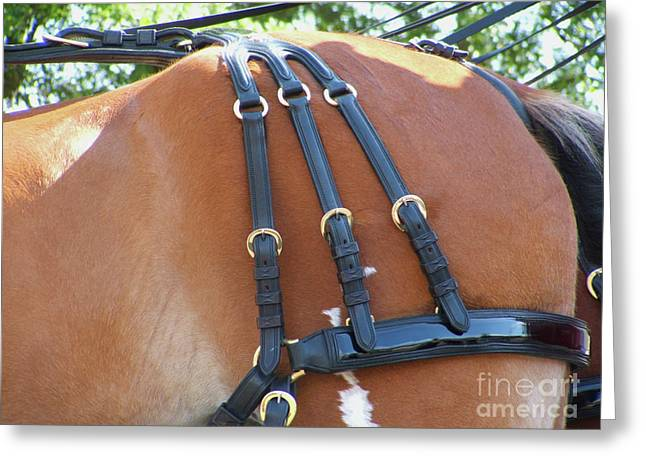 Clydesdale Tack Greeting Card