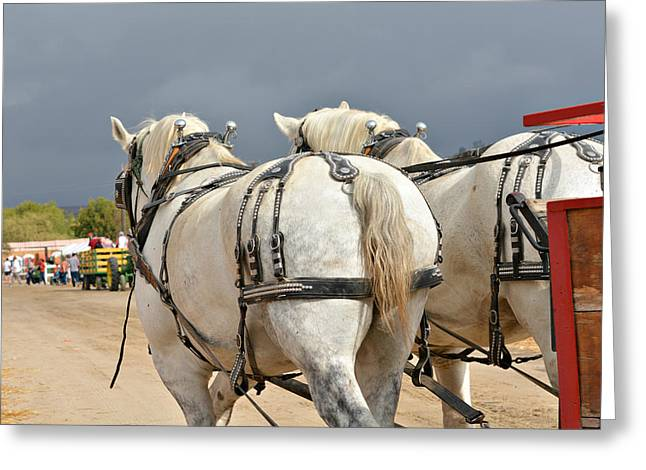Clydesdales At Work Greeting Card