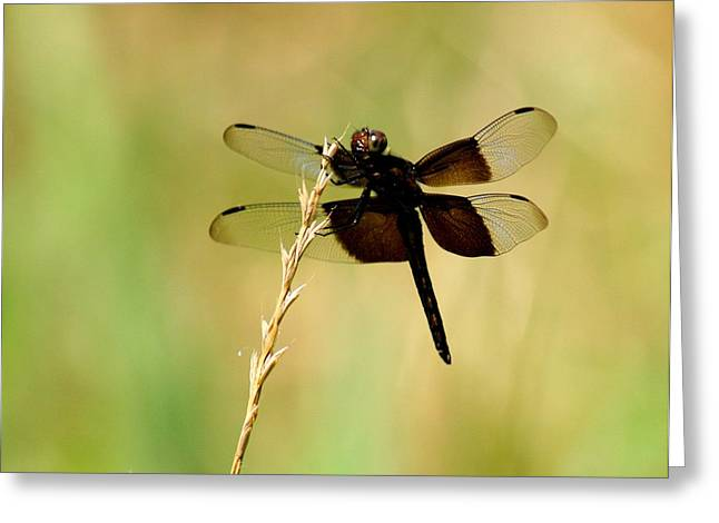 Coal Black Dragonfly Greeting Card