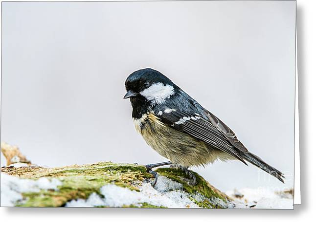 Greeting Card featuring the photograph Coal Tit's Profile by Torbjorn Swenelius