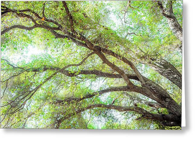 Coast Live Oak Branches Greeting Card