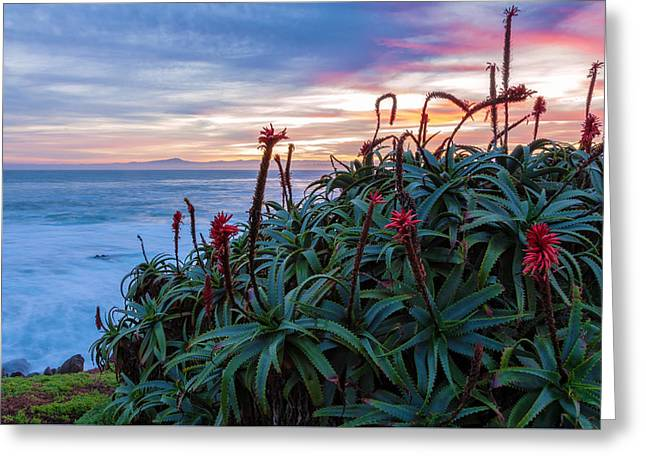 Coastal Aloes Greeting Card by Jonathan Nguyen