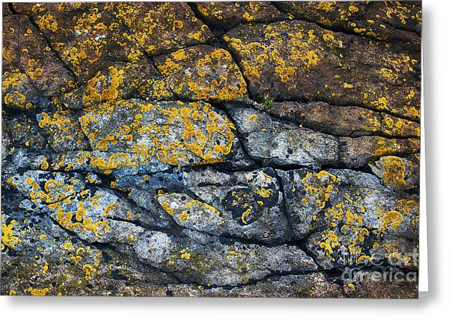 Coastal Colors Greeting Card by Tim Gainey