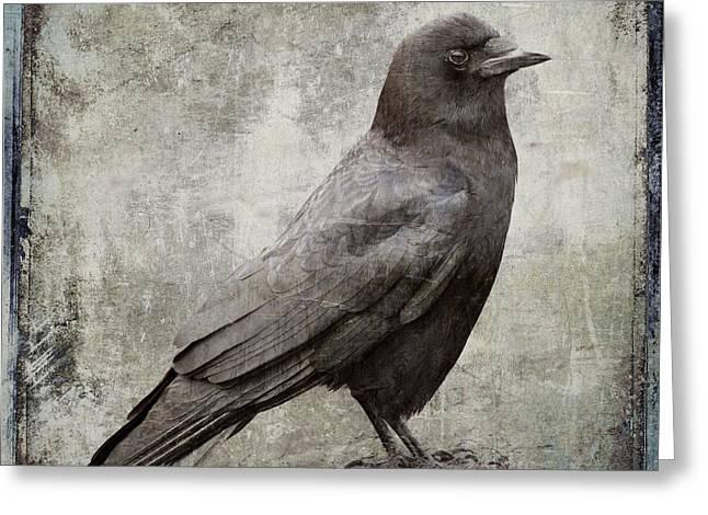 Coastal Crow Greeting Card by Carol Leigh
