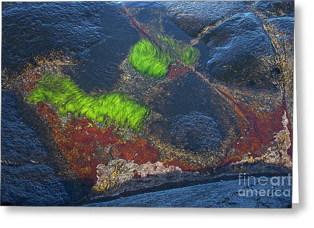 Coastal Floor At Low Tide Greeting Card by Heiko Koehrer-Wagner
