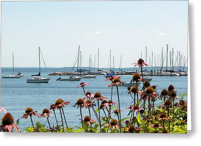 Coastal Niantic Greeting Card by D Steven Brito