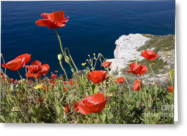 Rugged Cliffs Greeting Cards - Coastal Poppies Greeting Card by Richard Garvey-Williams