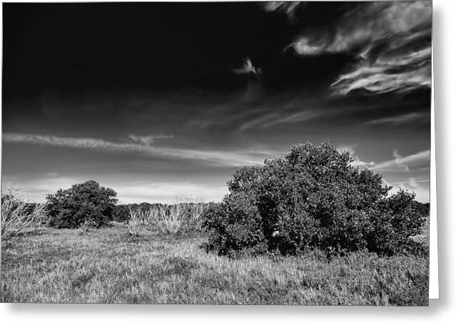 Coastal Prairy -2 Bw Greeting Card