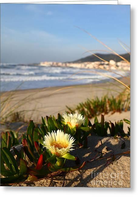 Coastal Scenery In Northern Portugal Greeting Card