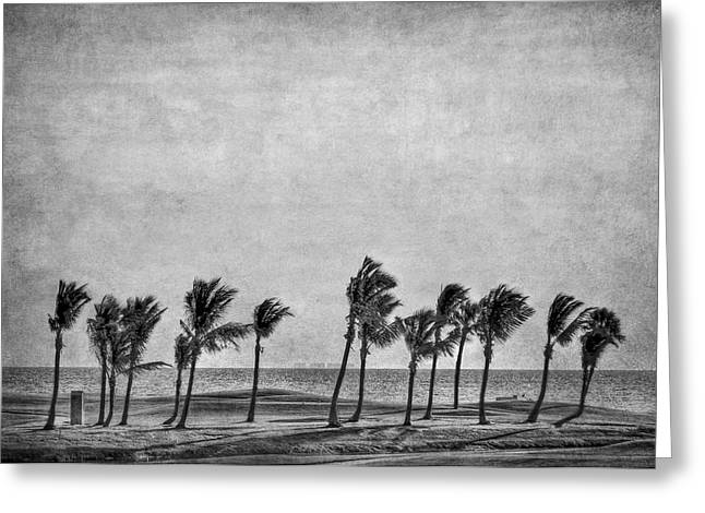 Coastal Winds Greeting Card by Evelina Kremsdorf