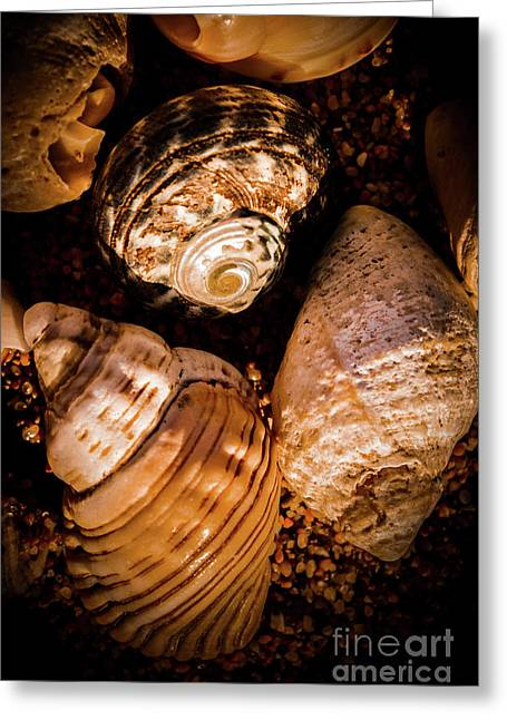 Coastline Shells, Marine Still Life Art Greeting Card by Jorgo Photography - Wall Art Gallery