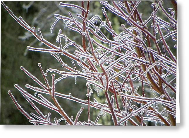 Coat Of Ice Greeting Card by Cindy Gacha