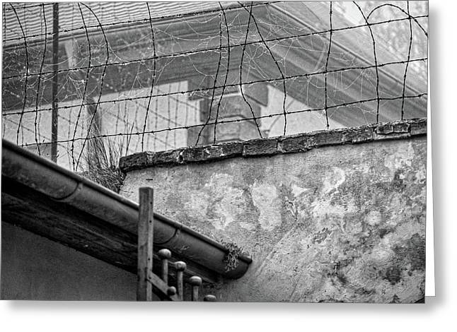 Cobwebs On Barbed Wire Greeting Card
