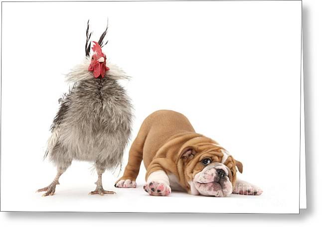Cock N Bull Greeting Card