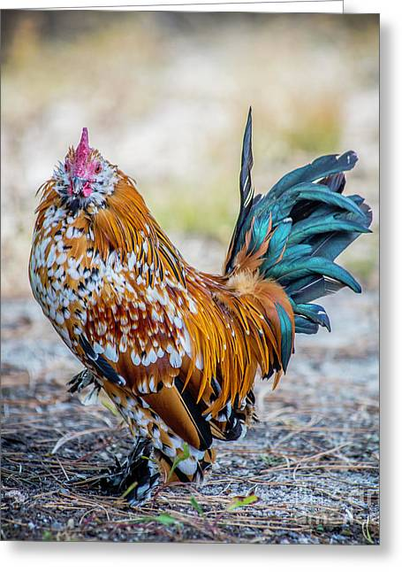 Cock Of The Walk Greeting Card by Nancy Forehand Photography