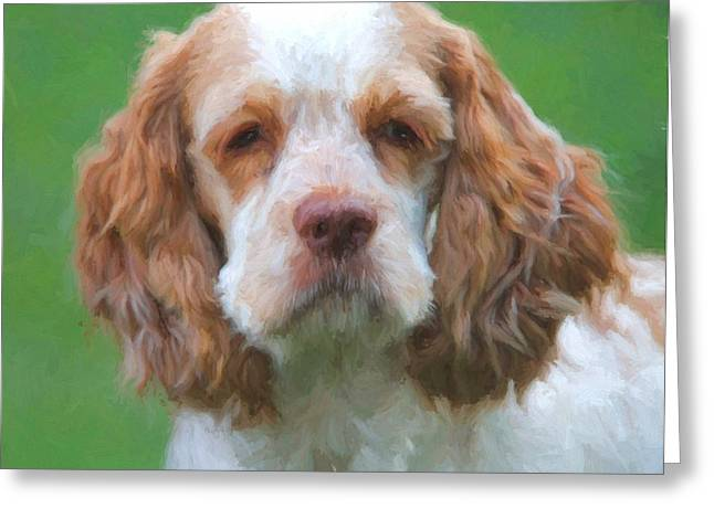 Cocker Spaniel On Green Greeting Card by Dan Sproul