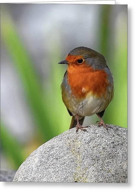 Cocky Robin Greeting Card