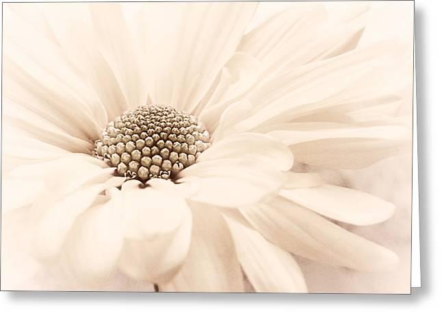 Greeting Card featuring the photograph Coco Ice by Darlene Kwiatkowski