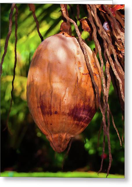 Coconut 2 Greeting Card