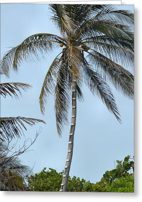 Coconut Collecting Greeting Card by JAMART Photography